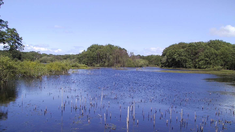 Brown Moss boggy lake