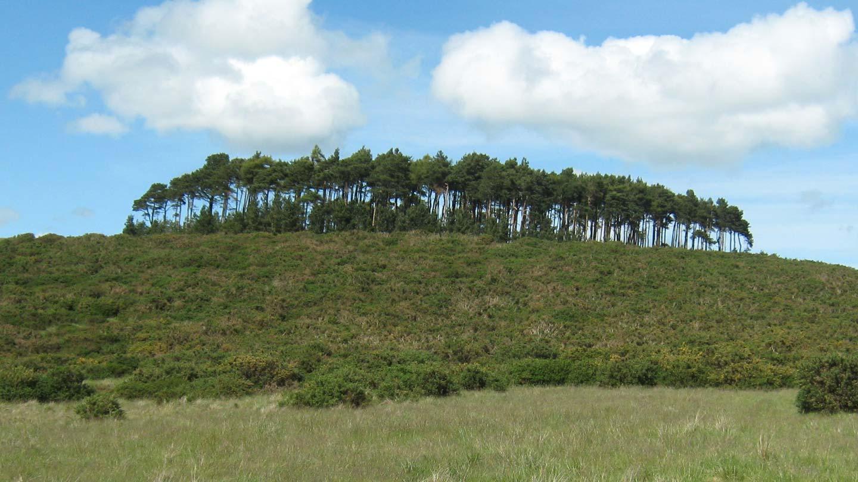 Treetops at Bromlow Callow