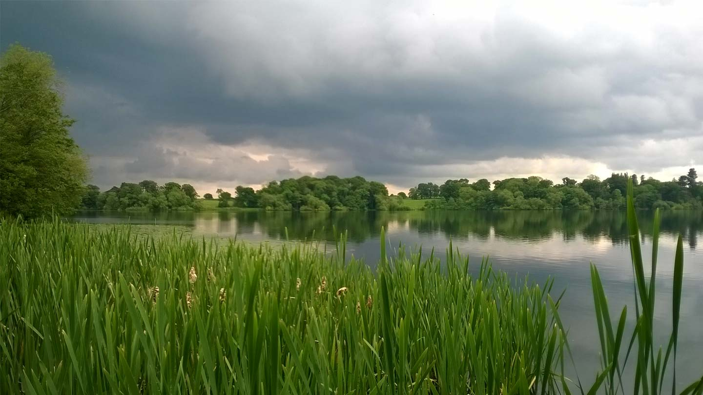 The Mere with water plants on a cloudy day