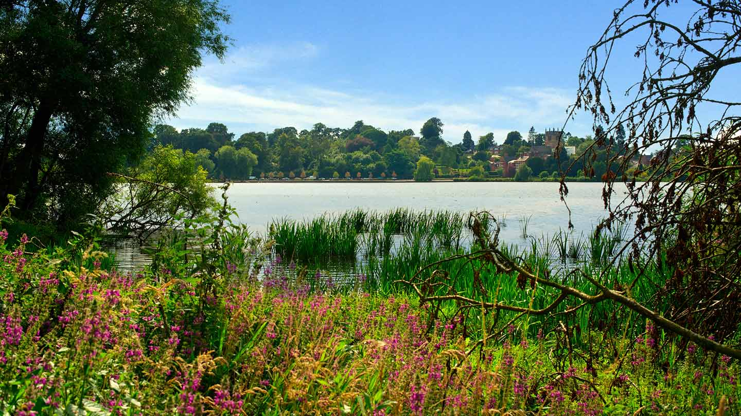 View across the Mere with wild flowers in the foreground