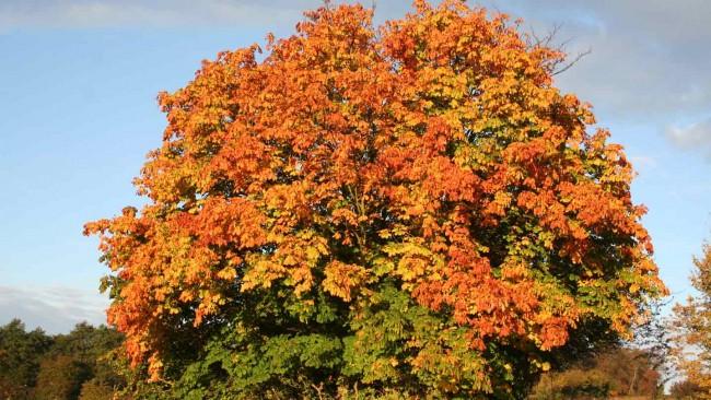 Capture the autumn colour on camera image