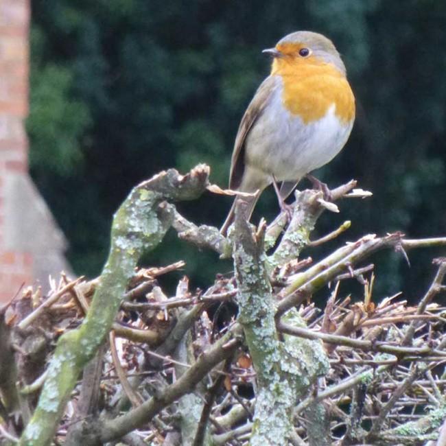 Identify garden birds image