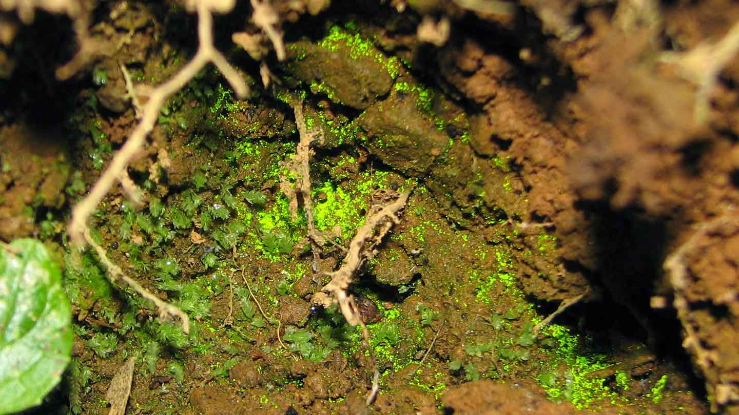 Luminous green moss on mud